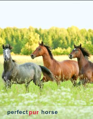 horse_blog2